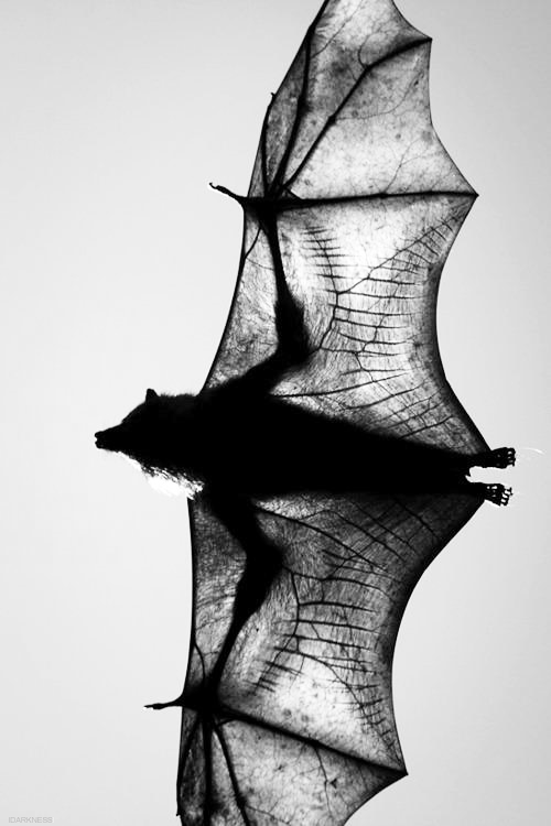 Halloween Inspiration | Bat