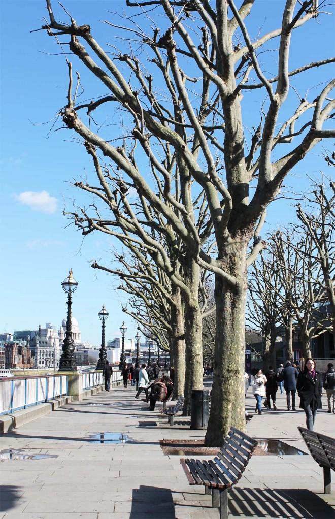 Thames path walk | Cake + Whisky